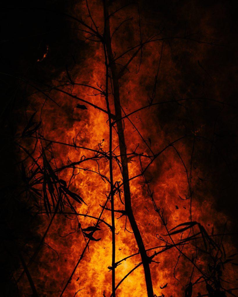 🌳 🔥 Elevate temperature favoriscono la propagazione di roghi. Nella lotta all'antincendio boschivo tutti possono fare la propria parte
