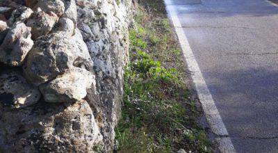 Ordinanza di manutenzione e taglio di vegetazione, siepi e rami sporgenti ai margini delle Strade Provinciali